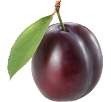 Plum · Pomegranate PNG image - Plum HD PNG