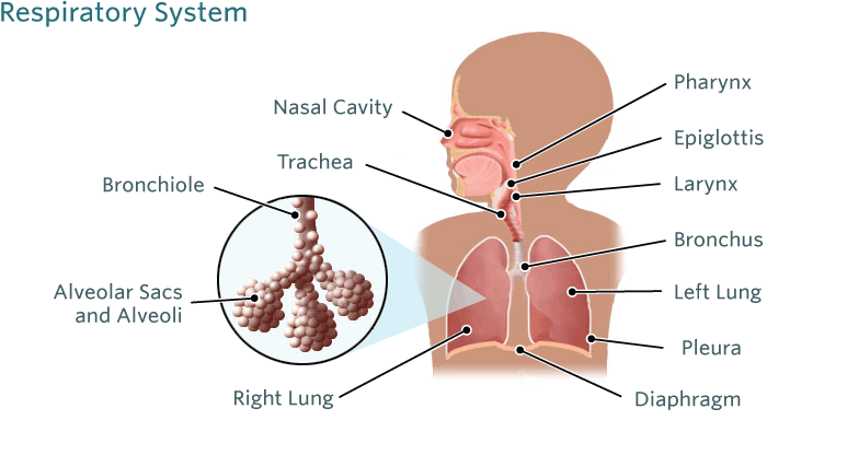 What are the different types of pneumonia? - Pneumonia Patient PNG