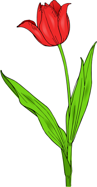 Download this image as: - PNG Bunga Tulip