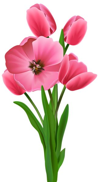 f44ceddcef2a43c6ddaaad88b1bc4d1c.jpg (326×600) - PNG Bunga Tulip