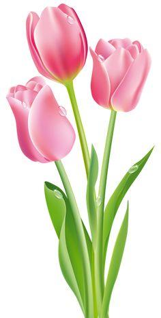 Pink Tulips PNG Clipart Image - PNG Bunga Tulip