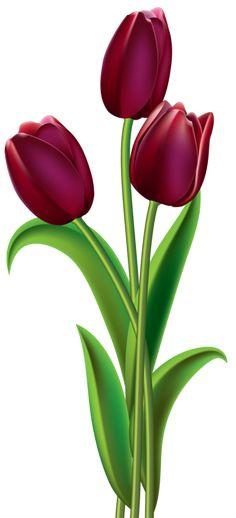 Red Dark Tulips PNG Clipart Image - PNG Bunga Tulip