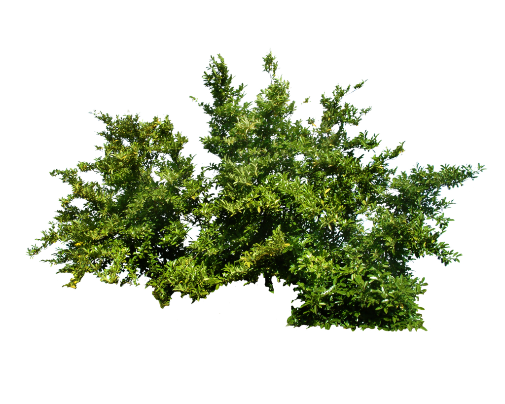 Shrub Bushes PNG
