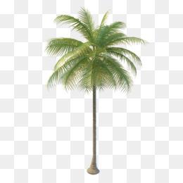 Arecaceae Coconut water Tree Nata de coco - coconut tree - PNG Coconut Tree