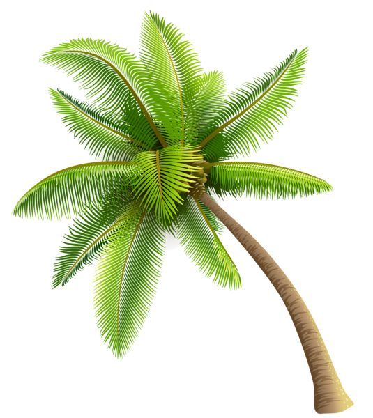 PNG Coconut Tree - 153484