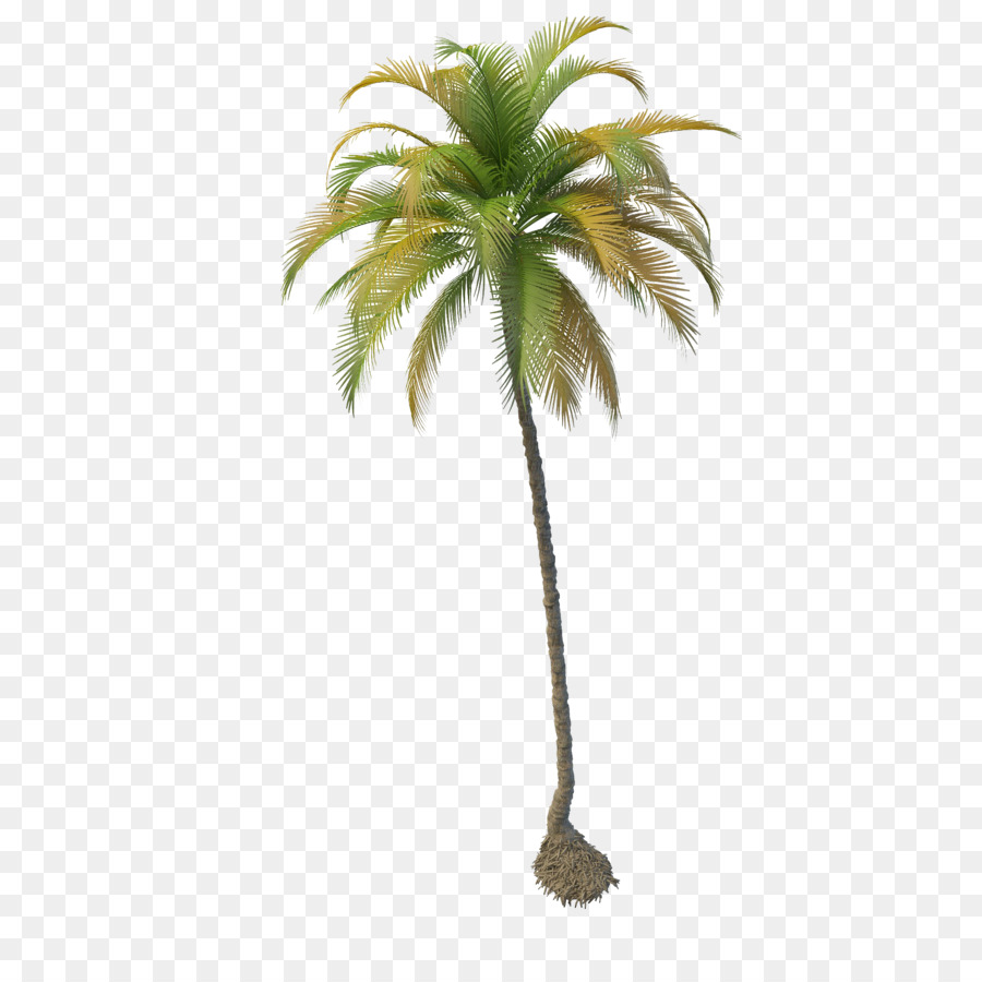 PNG Coconut Tree - 153485
