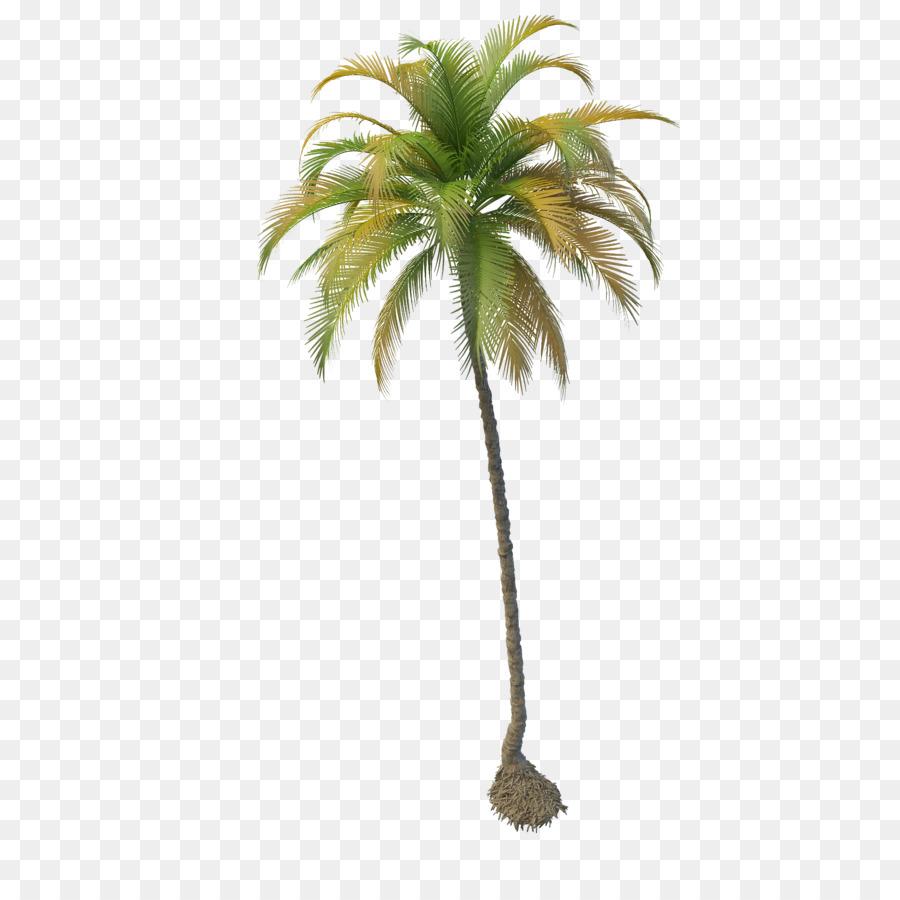 Coconut Tree - Coconut Tree PNG File - PNG Coconut Tree