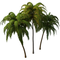 PNG Coconut Tree - 153490