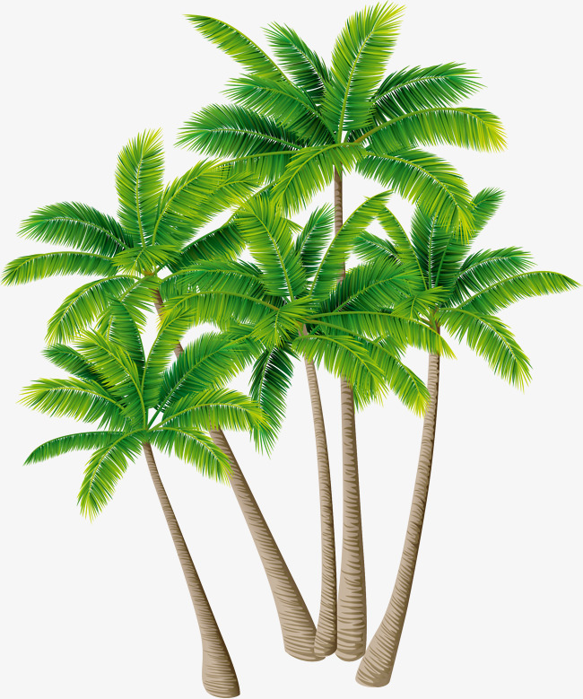 PNG Coconut Tree - 153491
