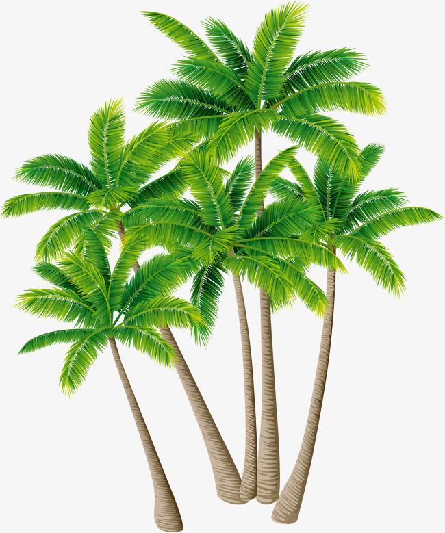 coconut tree vector material green plants, Coconut Tree Vector, Greenery, Coconut  Tree PNG - PNG Coconut Tree