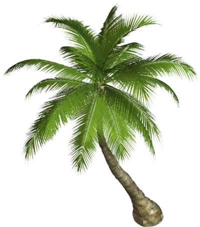 PNG Coconut Tree - 153486