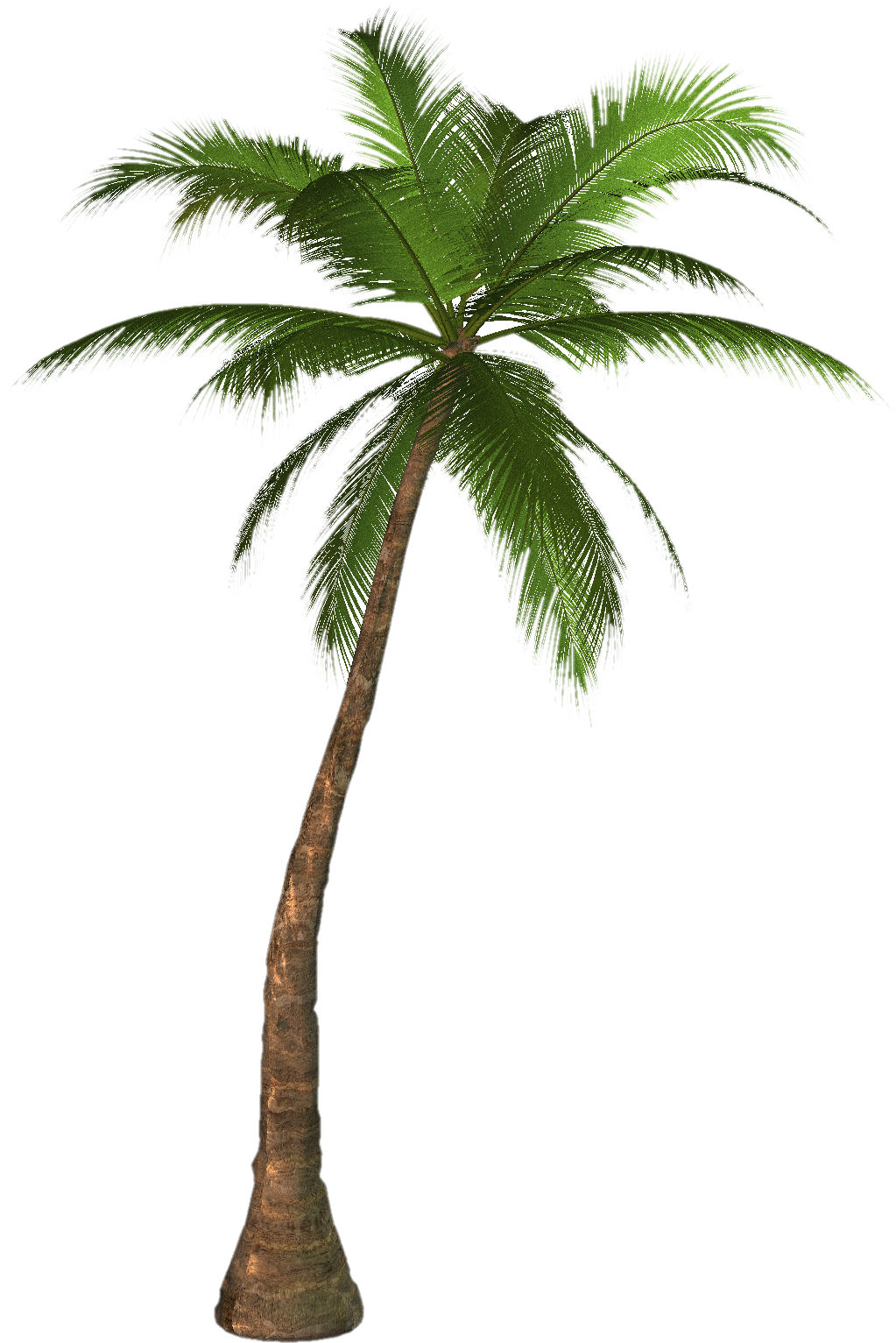 PNG Coconut Tree - 153489