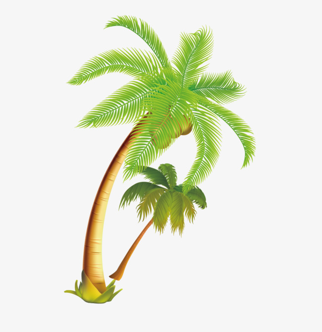PNG Coconut Tree - 153475