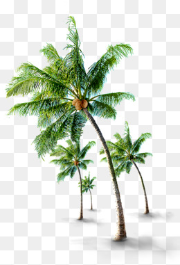 tropical coconut trees, Tourism, Coconut Trees, Tropical PNG and PSD - PNG Coconut Tree