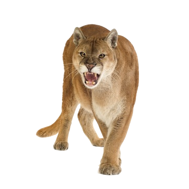 altha cougars personals What is an alpha male in this article chad howse goes over 25 characteristics that a man must possess if he is to be an alpha male some of them may surprise you.