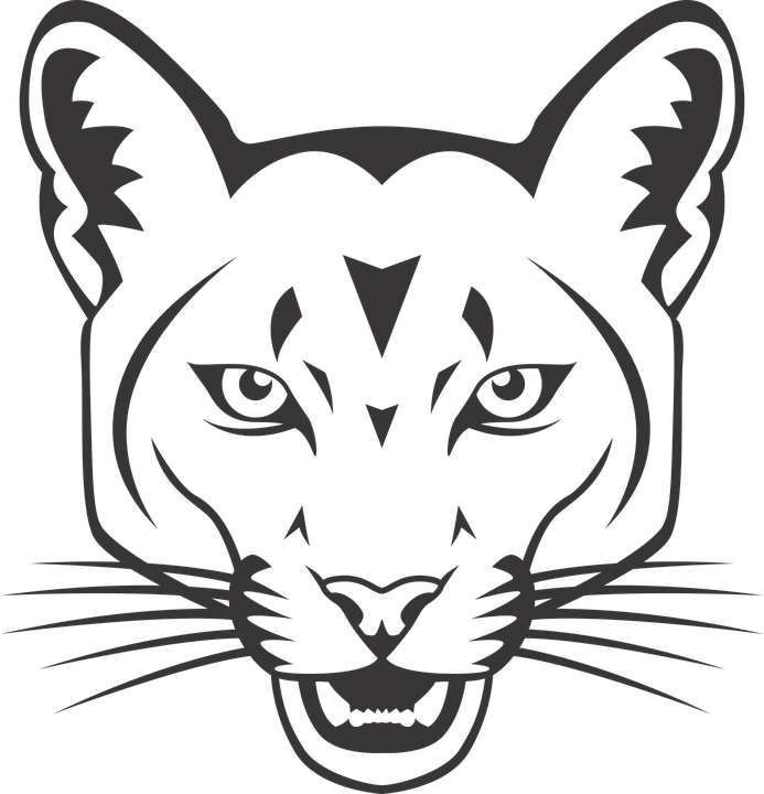 Cougar Face Line Drawing : Png cougar transparent images pluspng