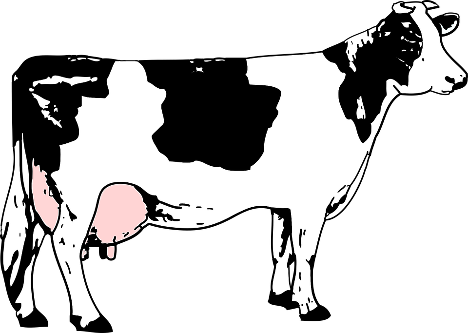 Black, Blanche, Cow, Grass, Noire, White - PNG Cow Black And White