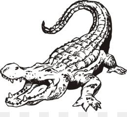 PNG Crocodile Black And White - 133433