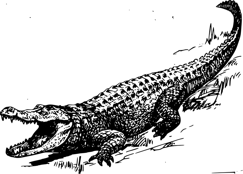 PNG Crocodile Black And White - 133447