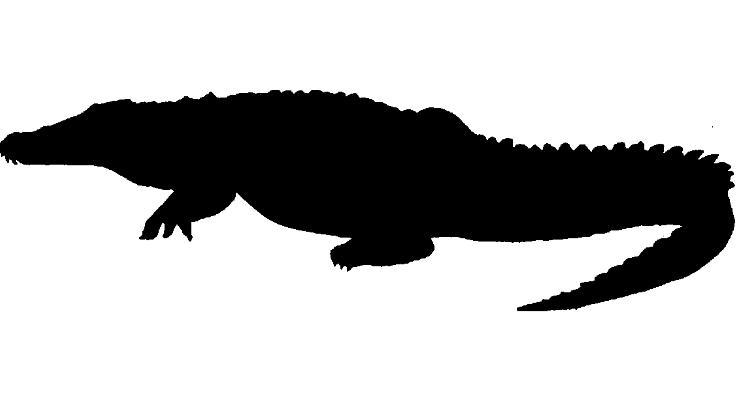 PNG Crocodile Black And White Transparent Crocodile Black ...