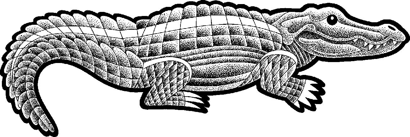 PNG Crocodile Black And White - 133434