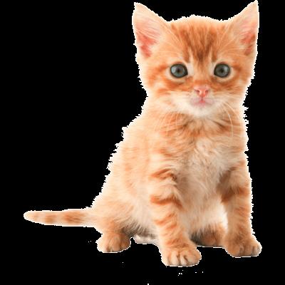 PNG Cute Cat - 133055