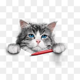 PNG Cute Cat - 133050