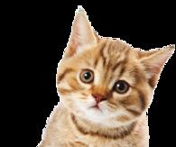 PNG Cute Cat - 133057