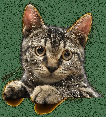 PNG Cute Cat - 133048