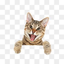 Funny Looking Cat Image