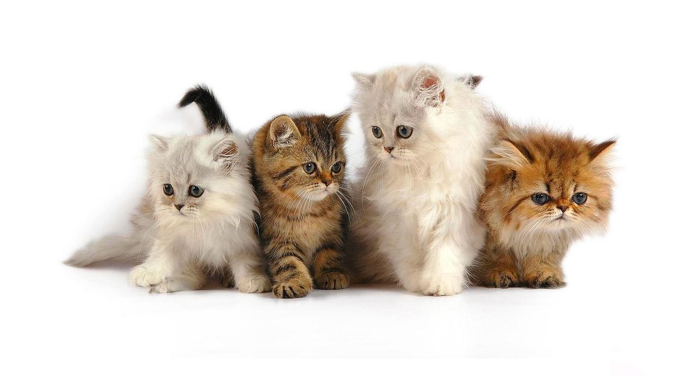 PNG Cute Cat - 133054