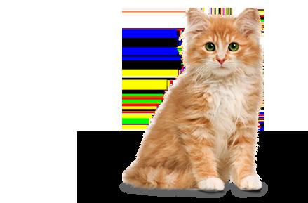 PNG Cute Cat - 133049