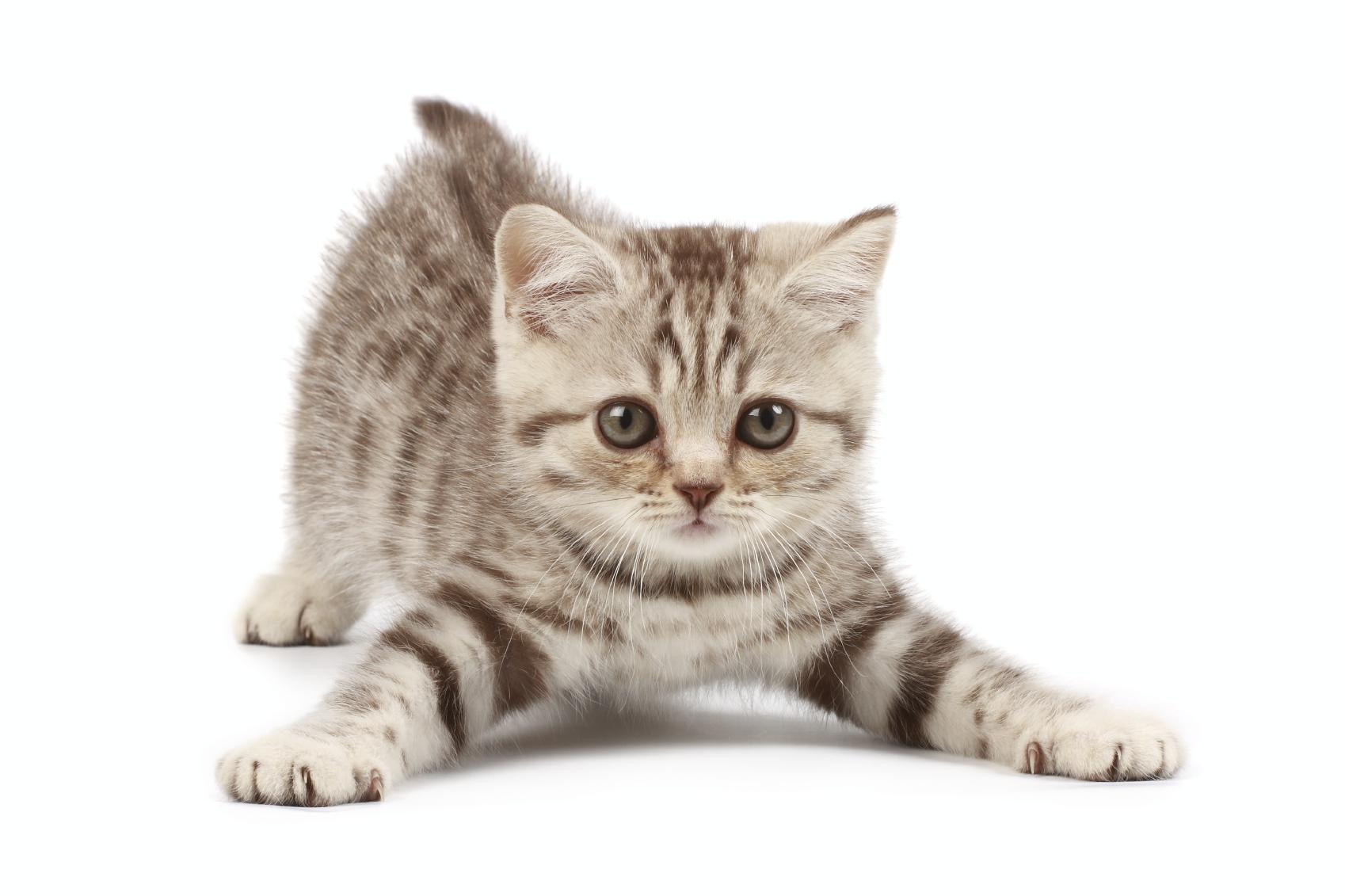 PNG Cute Cat - 133061