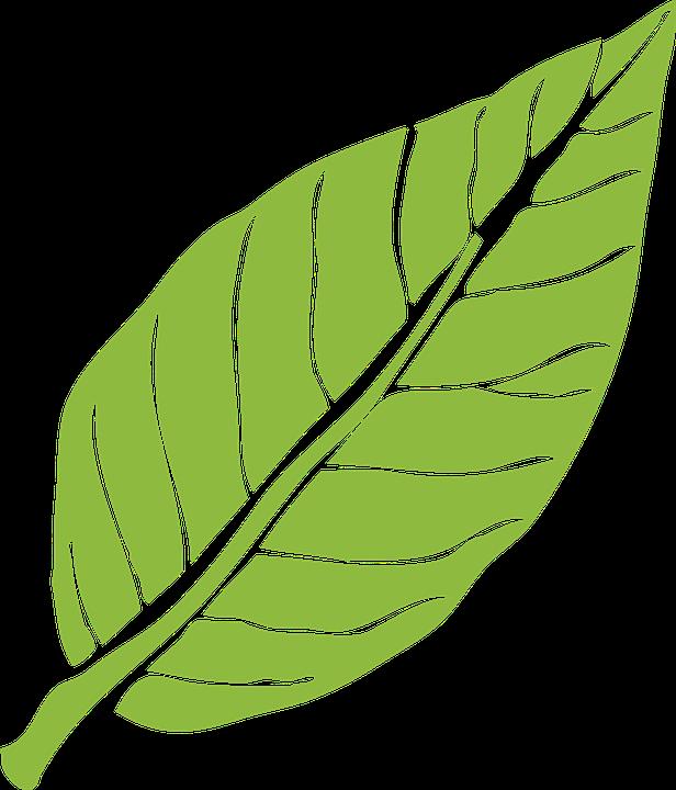 Daun, Alam, Hijau, Tanaman, Pohon, Pola, Dedaunan - PNG Daun