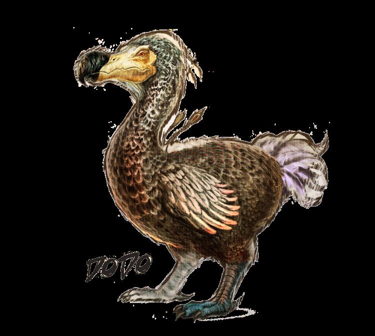PNG Dodo - 83481