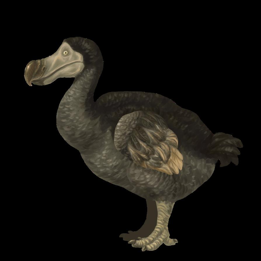 PNG Dodo - 83472