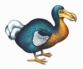 PNG Dodo - 83471