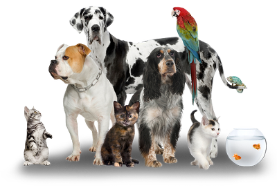 PNG Domestic Animals - 146517