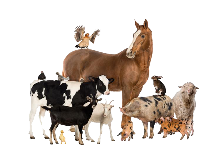 PNG Domestic Animals - 146503