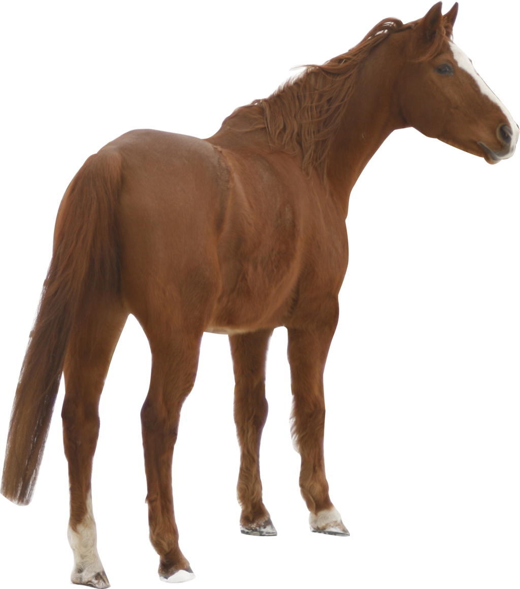 PNG Domestic Animals - 146506