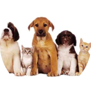 PNG Domestic Animals - 146504