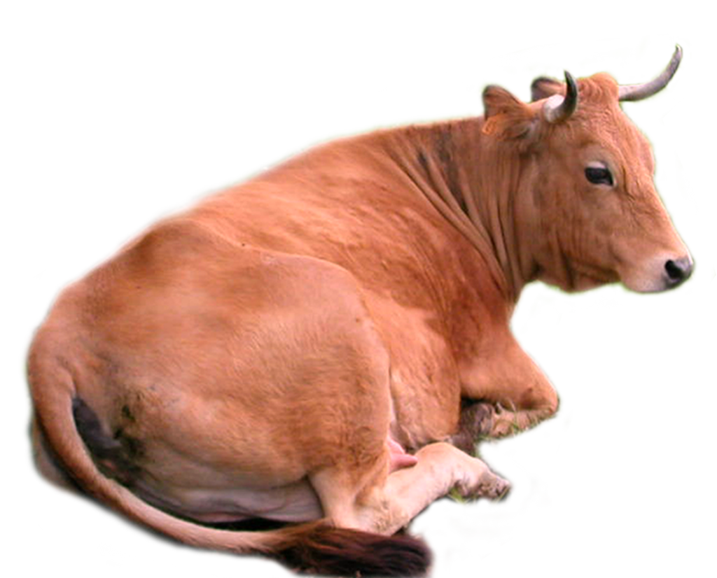 PNG Domestic Animals - 146505