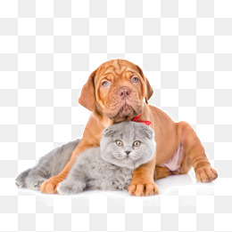 Cute pet cats and dogs, Cute Pet Cats And Dogs, Animal Pictures, Puppy - PNG Domestic Animals