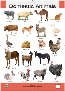 PNG Domestic Animals - 146502