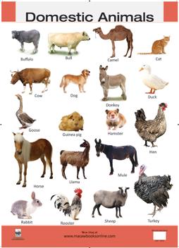 Domestic Animals Hires - PNG Domestic Animals