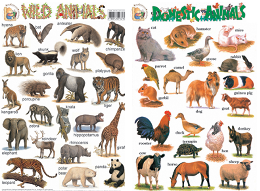 Early Learning Wallcharts - Wild Animals u0026 Domestic Animals - PNG Domestic Animals