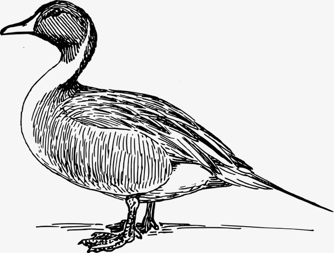 Hand-painted duck, Black, Line, Animal PNG Image and Clipart - PNG Duck Black And White
