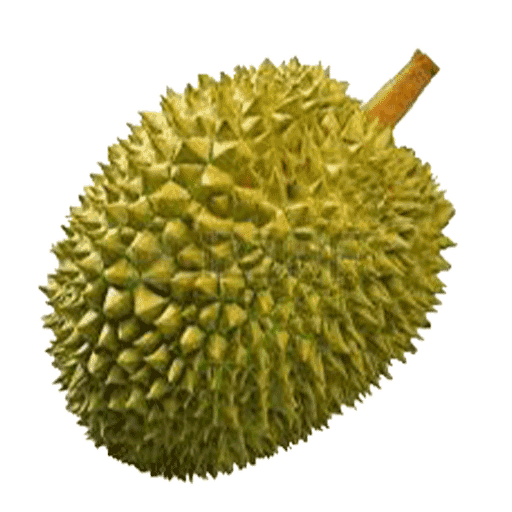 PNG Durian - 135714