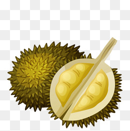 Durian, Fruit, Durian, Food PNG and Vector - PNG Durian