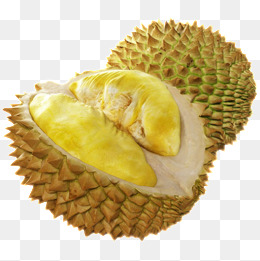 Durian, Fruit King, Durian Fruit, Cut Durian PNG Image and Clipart - PNG Durian